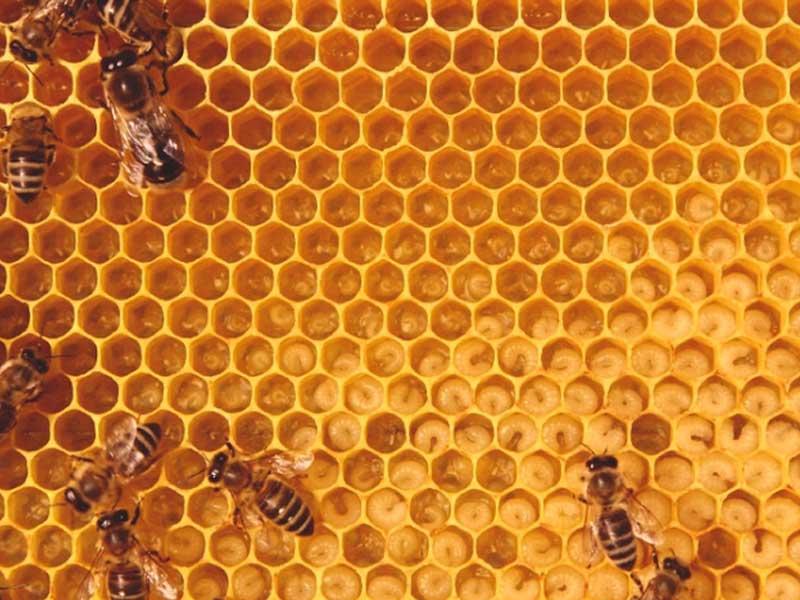 Beekeeping Classic