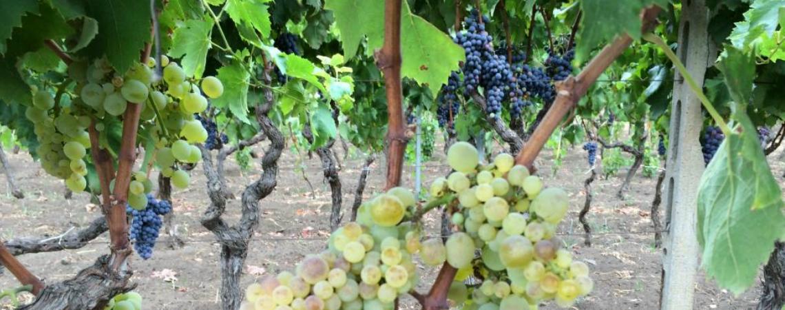 Wine tasting Plus - Oro Detna
